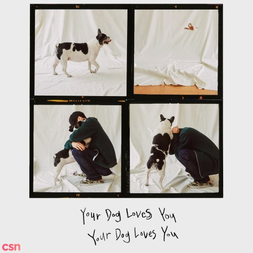 Your Dog Loves You